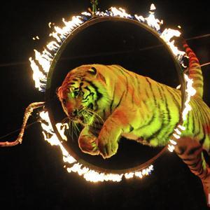 Цирки Елани