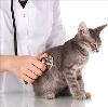 Ветеринарные клиники в Елани